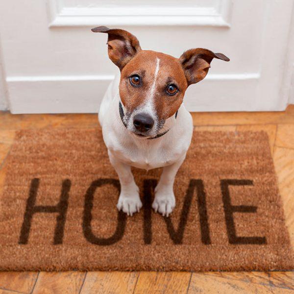 home-watch-adelaide-pets